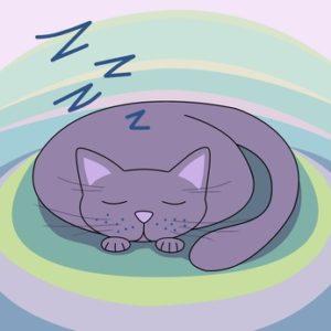 chat-qui-dort.